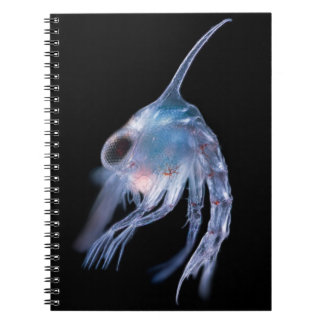 Planktonic Crustacean Notebook