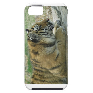 Planning Kitty Wickedness! iPhone SE/5/5s Case