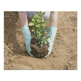 Plant a Tree on Earth Day Print