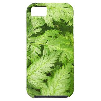 Plant Aegopodium Podagraria iPhone SE/5/5s Case