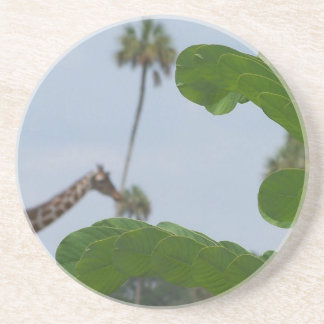 Plant and blue sky with giraffes in the background beverage coaster