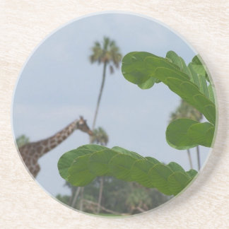 Plant and blue sky with giraffes in the background sandstone coaster