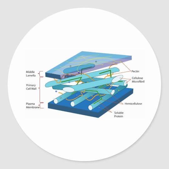 Plant cell wall diagram classic round sticker