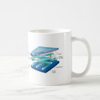 Plant cell wall diagram classic white coffee mug