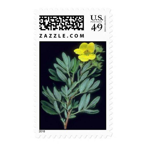 Plant Cinquefoil Postage