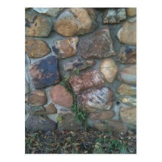 Plant climbing a stone wall postcard