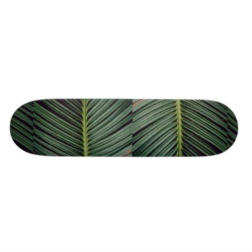 Plant Cycad Fan Skateboard