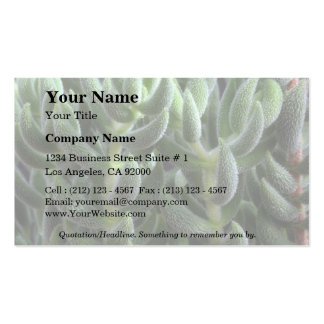 Plant Delosperma Double-Sided Standard Business Cards (Pack Of 100)