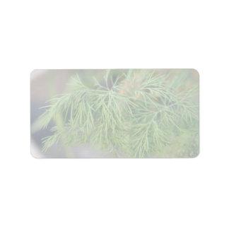 Plant Dill Label