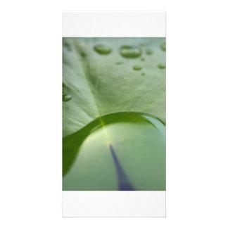 Plant Drops Card