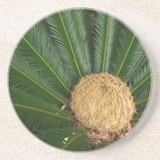 Plant/Flower Series---Sago Palm Coaster