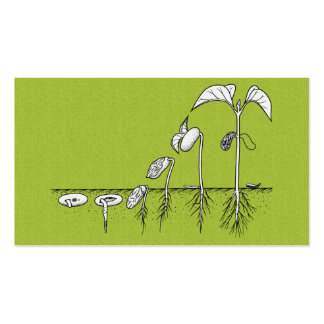 Plant Germination Illustration Business Cards