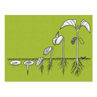 Plant Germination Illustration Postcard