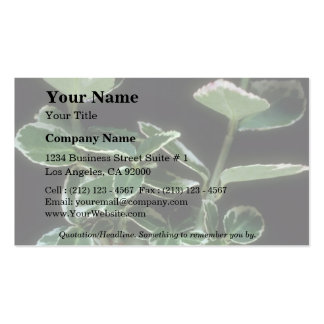 Plant Gold Dust Double-Sided Standard Business Cards (Pack Of 100)