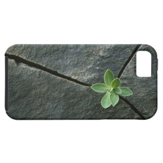 Plant Growing in Cracked Boulder iPhone 5 Covers