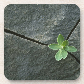 Plant Growing in Cracked Boulder Coasters