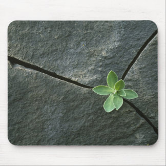 Plant Growing in Cracked Boulder Mouse Pad