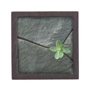 Plant Growing in Cracked Boulder Premium Gift Box