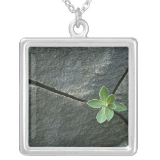 Plant Growing in Cracked Boulder Silver Plated Necklace
