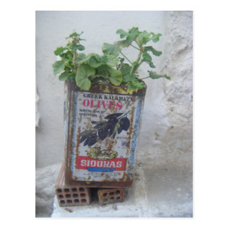Plant Growing in Olive Tin, Naxos, Greece Postcard