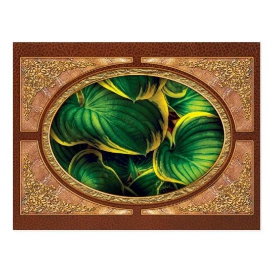 Plant - Hosta Leaves Postcard