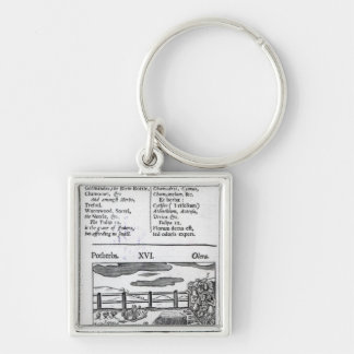 Plant Husbandry from 'Orbis sensualism pictus' Silver-Colored Square Keychain