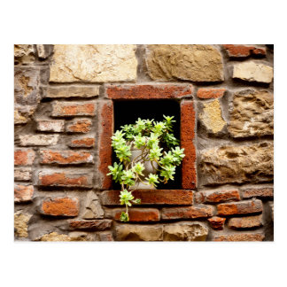 Plant in the Wall Postcard