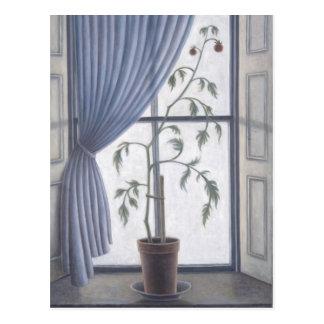 Plant in Window 2003 Postcard
