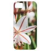 plant iPhone 5 covers