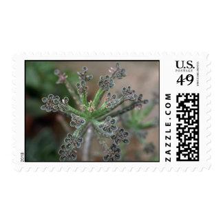 Plant Kalanchoe Postage Stamp