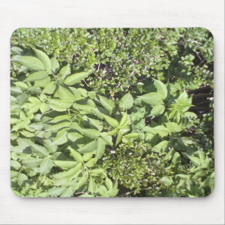 Plant leaf mouse pad