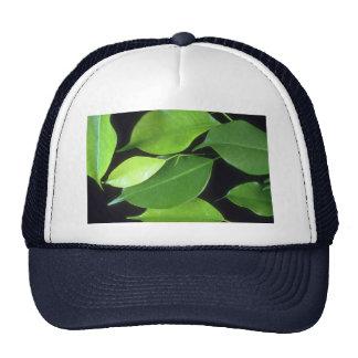 Plant Leafy Ben Mesh Hats