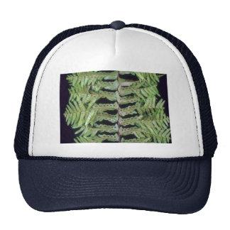 Plant Leafy Hat