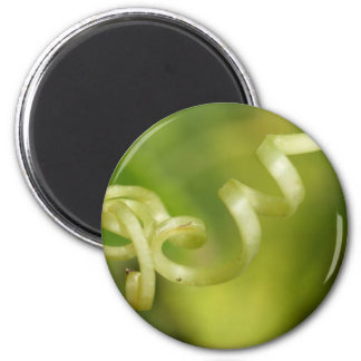 plant  leaves 2 inch round magnet