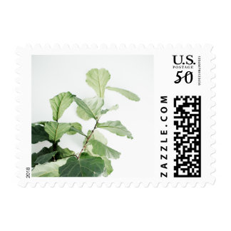 Plant Lovers Fresh & Modern Fiddle Leaf Fig Tree Postage