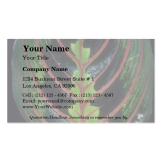 Plant Maranta Double-Sided Standard Business Cards (Pack Of 100)
