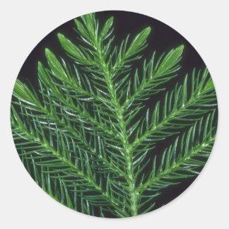Plant Norfolk Pine Round Sticker