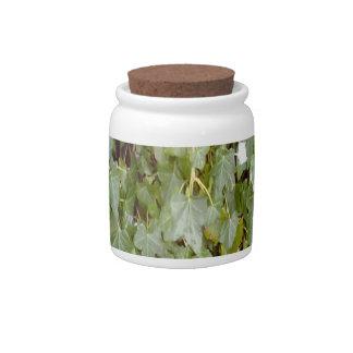 Plant Photo Candy Jars