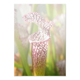 Plant - Pretty as a pitcher plant Card