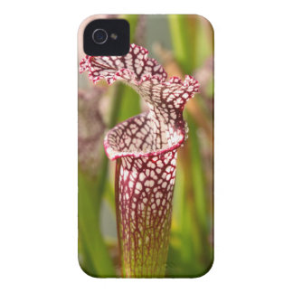 Plant - Pretty as a pitcher plant iPhone 4 Case-Mate Cases