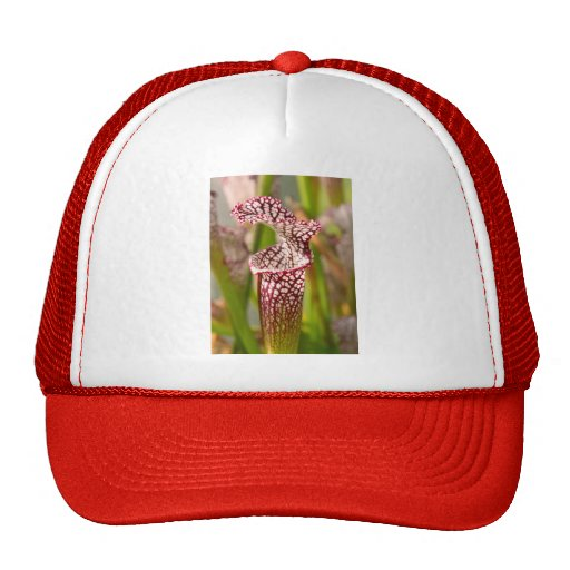 Plant - Pretty as a pitcher plant Trucker Hats