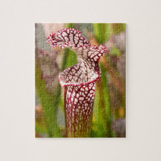 Plant - Pretty as a pitcher plant Jigsaw Puzzle