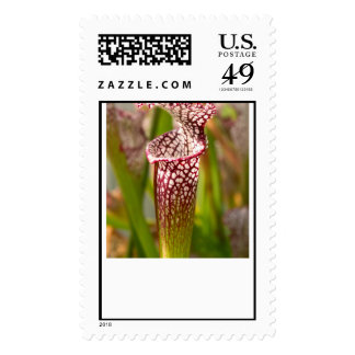 Plant - Pretty as a pitcher plant Stamps