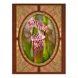 Plant - Pretty as a pitcher plant Postcards