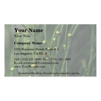 Plant Psilotum Double-Sided Standard Business Cards (Pack Of 100)