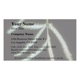 Plant Pteris Double-Sided Standard Business Cards (Pack Of 100)