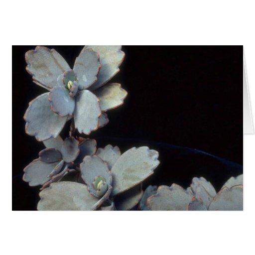 Plant Purple Kalanchoe Card