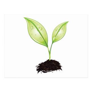 Plant ~ Seedling Green Earth Leaf & Root Seed Postcard
