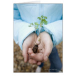 Plant seedling greeting card