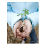 Plant seedling post card